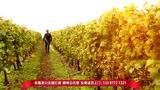 柳江县葡萄酒总代理红酒总代,诚寻经销商,先供货后结款