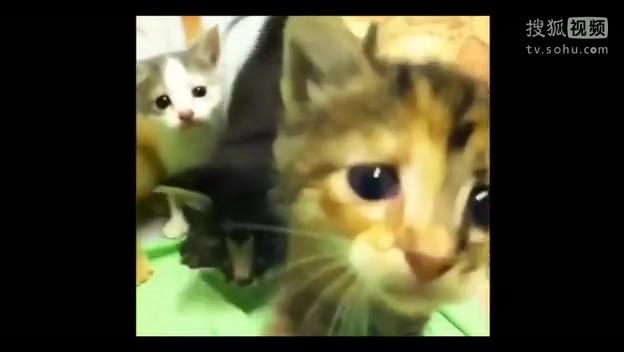 喵星人:网络流行语,将猫猫们戏称是从遥远外太空来的,喵星球来到地球的外星人,利用很萌的外表来骗取人类的信任。然后出其不意地占用地球的鱼类和水产品资源。天敌是汪星人。最喜爱的食物是吱星人和鱼星人。猫咪有时会因为人类的碰触或者逗弄而露出一些颇带喜感的动作,有些动作跟人.