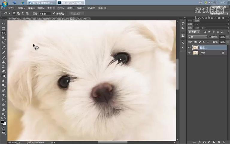 ps动物手绘照片教程