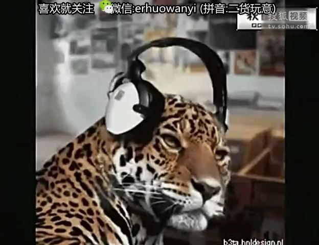 可爱的动物-360视频搜索